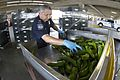 CBP Agriculture Specialist Conducts Pepper Inspections at an El Paso Port of Entry (20841197892).jpg
