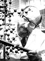 CSIRO ScienceImage 11341 Dr Hugh Lindley a protein chemist at work at the CSIRO Parkville laboratory.jpg