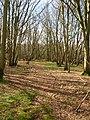 Caldicott's Wood - geograph.org.uk - 352663.jpg