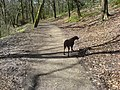 Callie in Borsdane Woods - geograph.org.uk - 435470.jpg