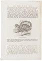 Callithrix torquata - 1700-1880 - Print - Iconographia Zoologica - Special Collections University of Amsterdam - UBA01 IZ20200087.tif