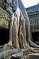 Cambodia-2550 (3609239026).jpg