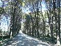 Camino a Puerto Tranquilo.JPG
