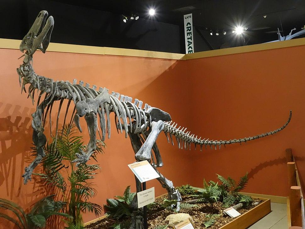 Camptosaurus fruita