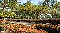 Campus yard.jpg