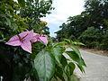 Carranglan, Nueva Ecija4022 07.JPG