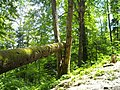 Cascada Urlătoarea drum - panoramio.jpg