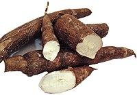 Cassava (2) .jpg