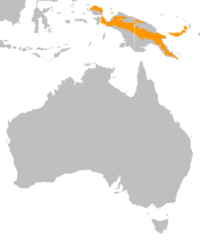 Casuarius bennetti distribution map.png