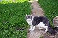 Cat (509301310).jpg