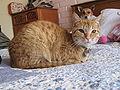 Cat 11 10 09.jpg