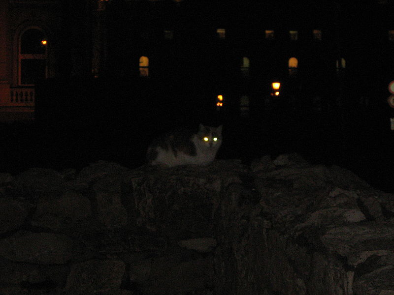 File:Cat at night in the castle district in Budapest.jpg