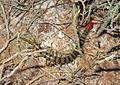 Centipede - Flickr - GregTheBusker.jpg