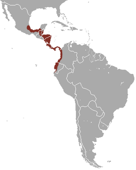 Central American Woolly Opossum area.png