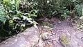 Chapinero, Bogotá, Bogota, Colombia - panoramio - aalozadag (3).jpg