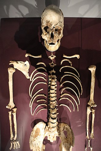 Cheddar Man - The upper body of the Cheddar Man