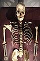 Cheddar Man upper body.JPG