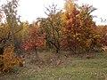 Cherkas'kyi district, Cherkas'ka oblast, Ukraine - panoramio (364).jpg