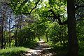 Cherkasy Obllikarnia Park 71-101-5008 SAM 7283.jpg