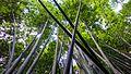 Chiang Rai (23495419684).jpg