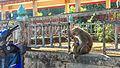 Chiang Rai (23756716579).jpg