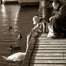Child And Swan.jpg