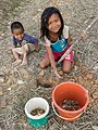 Children catching crabs and frogs stored in a bucket in Laos.jpg