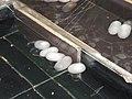 Chiny Shuzhou tkalnia jedwabiu 07.JPG