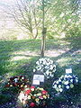 Chorley workers memorial tree.jpg