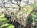 Chwarel Muriau Gwynion Quarry - geograph.org.uk - 319845.jpg