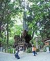 Cinnamomum camphora 20100612 (Kinomiya Shrine) (B).jpg