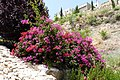 City of David, Jerusalem P1110591 (5921746901).jpg