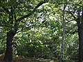 Clayton Wood oak and birch 5 Oct 2017.jpg