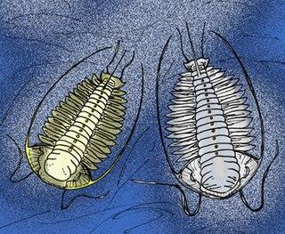 <i>Cloacaspis</i> genus of arthropods (fossil)