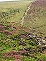 Coastal Heathland on Carvannel Downs - geograph.org.uk - 317978.jpg