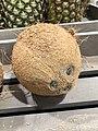 Coconut 1 2018-03-29.jpg