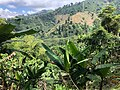 Coffee Farm (45353382114).jpg