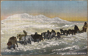 "Color post card. ""A crack dog team, Alaska."" - NARA - 297825.jpg"