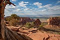 Colorado National Monument (35c59f40-a020-4bc5-9c99-e042fc6f2f86).jpg