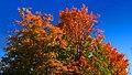 Colorful - panoramio (1).jpg