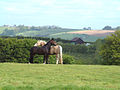 Contented horses - geograph.org.uk - 45111.jpg