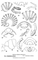 Cook 1898 American oniscoid Diplopoda of the order Merocheta, Plate 29.png