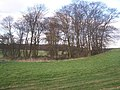 Copse protecting Chapel of St Blaise - geograph.org.uk - 1200227.jpg