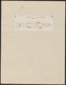 Coregonus ruber - 1700-1880 - Print - Iconographia Zoologica - Special Collections University of Amsterdam - UBA01 IZ14800067.tif