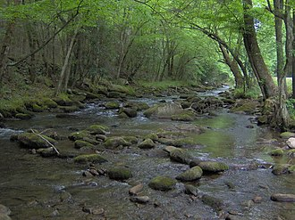Cosby, Tennessee - Cosby Creek