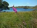 Cregennen Lakes - panoramio (18).jpg