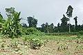 Cultures à São Tomé (5).jpg