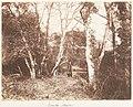 Cureuleo Meadow MET DP143523.jpg