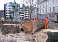 Düsseldorf, Martin-Luther-Platz, Abholzen von zwei alten Bäumen, 2012-02 (3).jpg