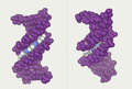 DNA-ligand-by-Abalone.png